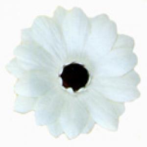 Gerbera Daisies White GP 3″ 10 CT